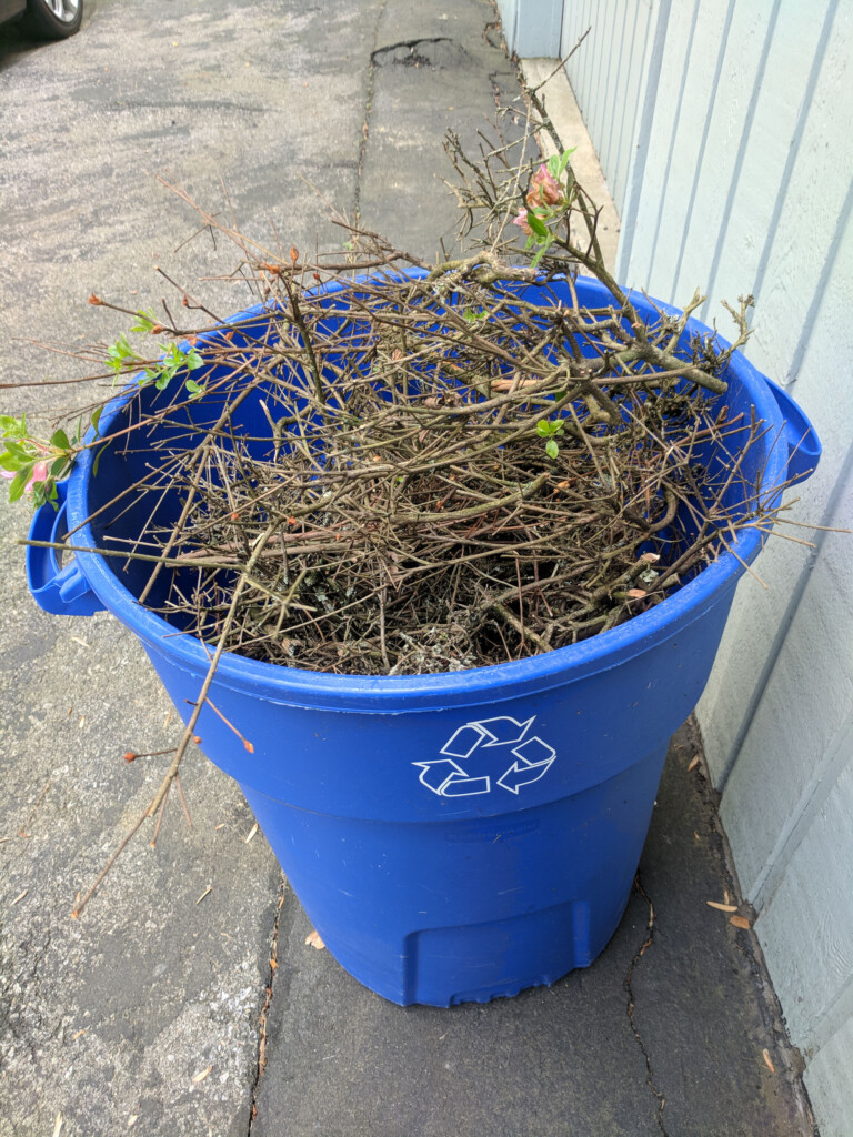 Large recycling bin of what I trimmed off the azaelea