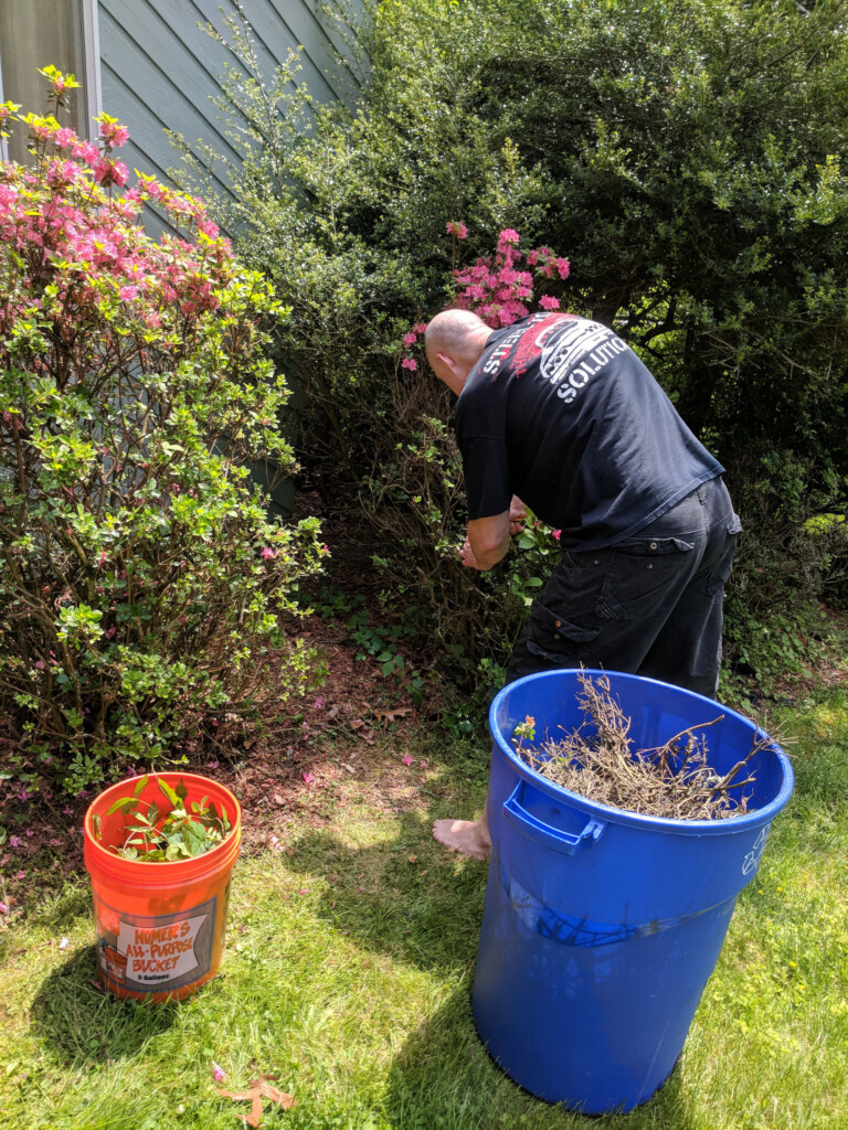Azaela bushes, garbage cans and my partner helping me trim debris